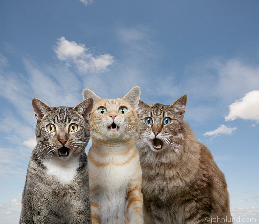 Funny amazed cat expression picture The three cats