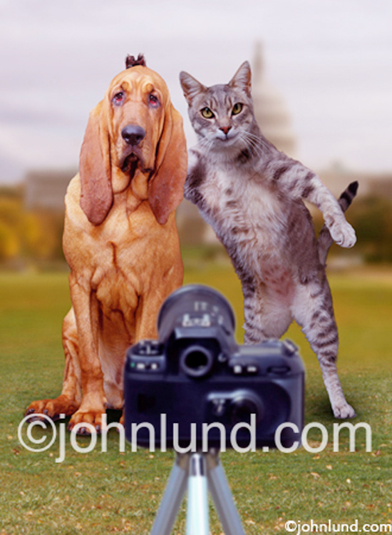 A cat holds two claws up behind a Bloodhound's head as they pose for a snapshot in front of the white house in a lol Cat picture.