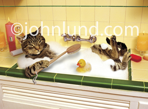A funny and happy tabby bathes in a kitchen sink using a long-handled brush and sharing the water with a rubber ducky in a humorous cat photo.