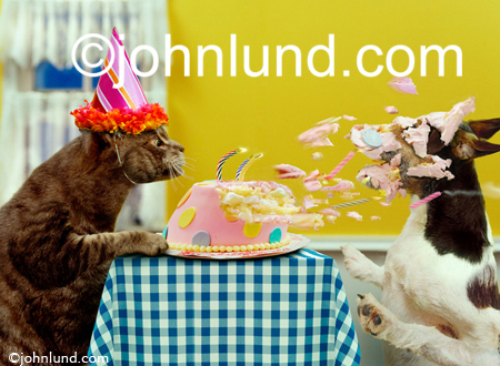 http://www.johnlund.com/images/Funny-Cat-Blowing-Candles-Out.jpg