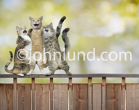 Three cats stand on a fence, arms around each other, and sing at the top of their voices.
