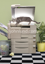 A funny gray cat with a mischievous grin lies on a copy machine and copies himself making him a copy cat!