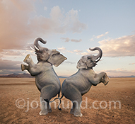 A pair of elephants dance together in the funny elephant picture designed for use in advertising, editorials, social media communications and humorous greeting cards.