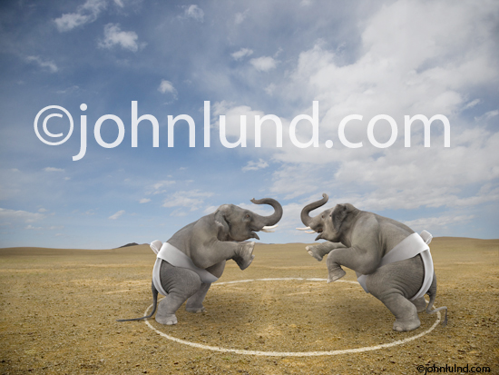 Funny Lol Elephant photo of two elephants facing off in a battle for dominance taking place in a Sumo Wrestling ring