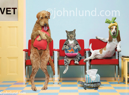 Funny pet picture of dogs and cats in a veterinarian's waiting room with various and assorted ills.