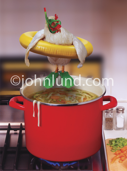funny chicken pictures. A Funny Chicken In Every Pot,