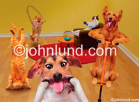 Funny animal stock picture of Pets going crazy in the home having wild party while their owners are away on vacation.