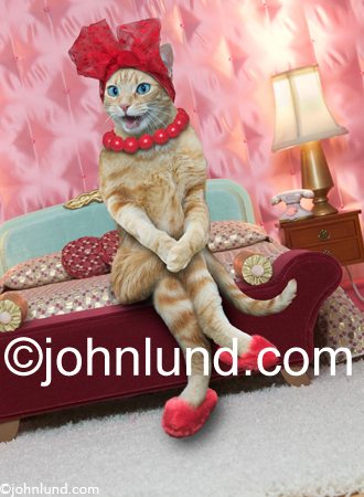 Funny cat picture of a feline sitting on a bed, wearing slippers, and confiding intimate gossip to the viewer.