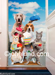 Cats and dogs stand at the door bearing get well gifts and presents. An animal antics image including a beagle and cats.