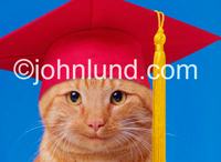 Graduating cat happily wearing a bright red mortar board cap with a yellow tassle against a deep blue background. Cat graduation photos and pictures.