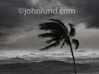 A palm tree is bent in the wind as white caps toss in the stormy waters behind and black clouds blot out the sun in this picture of a hurricane.