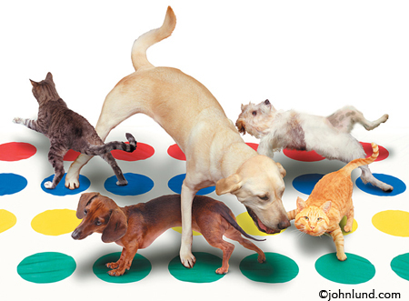 Print this Funny animal picture of dogs and cats playing twister on a golf shirt for your favorite pro.