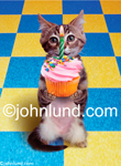 Birthday Images: Funny and cute animal and cat stock photo of a kitten holding out a cupcake with one lighted Birthday Candle on it...perfect for a birthday greeting card!