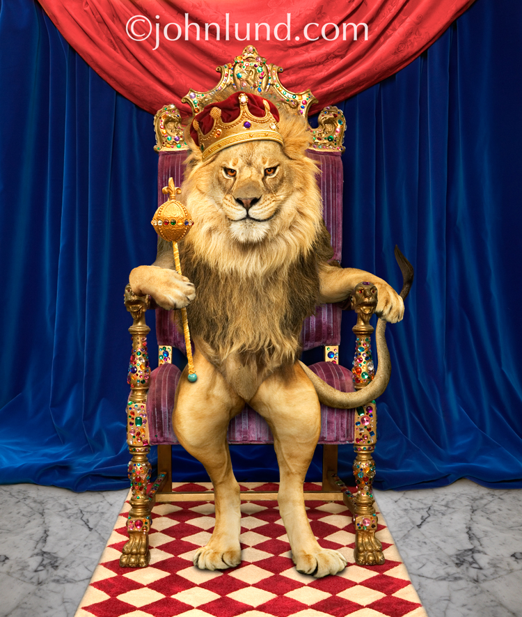 Lion king with crown - photo#8
