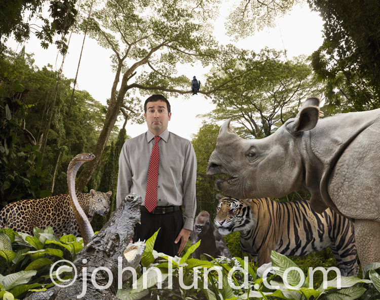 In this picture a businessman stands befuddled in a jungle full of wild and dangerous animals representing the concepts of risk, danger and adversity.