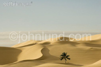 A palm tree stands behind a sand dune in this concept stock photo of an oasis. The desert is the Gobi desert in Mongolia and the palm tree was photographed in Brazil. This picture represents safety, salvation, rescue and hope.