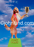 Stock photo and funny animal picture of a Golden Retriever standing on a Pedastal and holding a Trophy and savoring his win.