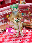 Funny picture of a cat enjoying desert in a cafe and bakery with a cup of coffee and a birthday candle on her pastry treat.