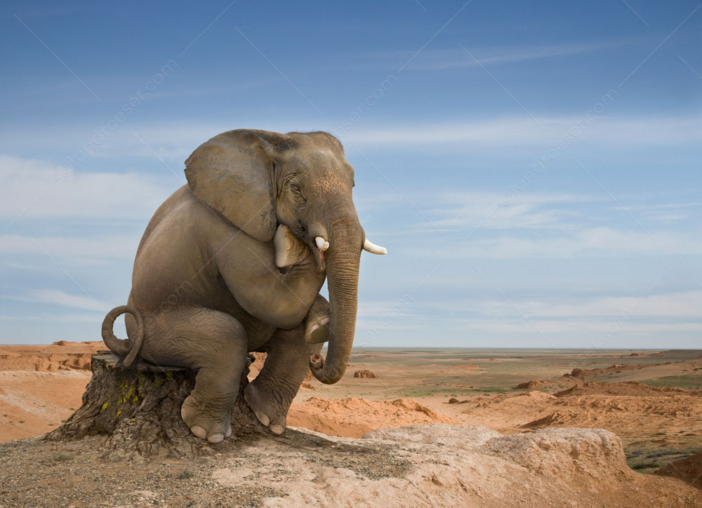 Funny photo of an elephant in Rodin's thinker pose, sitting on a tree stump with his chin resting on his hand, er foot.