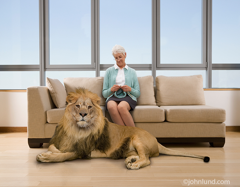 Picture of a senior woman sitting on a couch knitting with a protective lion vigilant at her feet.