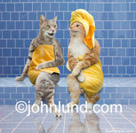 Funny animal stock picture of two cats gossiping in a tiled steam room and wearing towels. A funny Cat Picture. Great gift items for cat lovers. Cats in a blue tiled sauna with bright yellow towels on. Luxury spa pics.