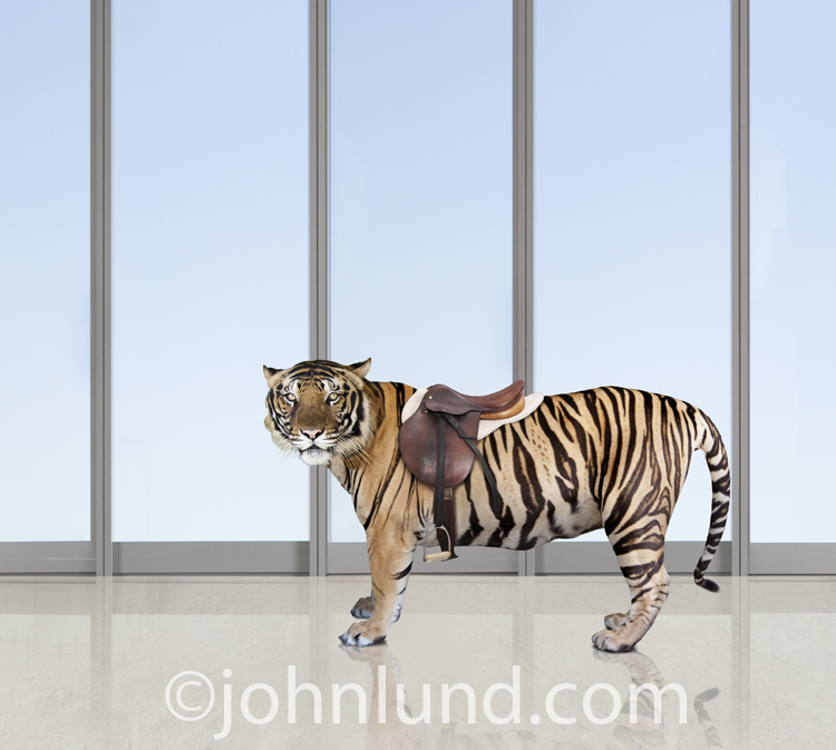 A tiger stands in an upscale office setting wearing a saddle in a concept stock photo about business challenges and risk.