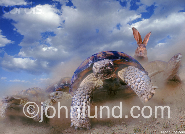 A herd of tortoises race a hare in this funny animal stock photo.
