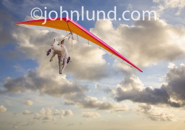 When Pigs Fly is a funny lol animal stock picture illustrating the concept of doing the impossible.