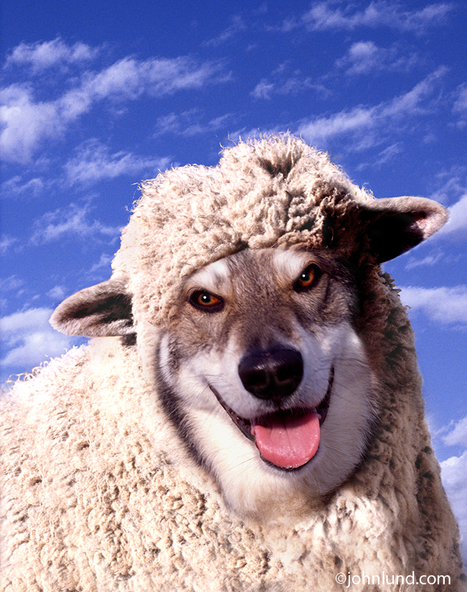 wolf in sheeps clothing funny