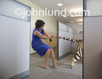 In this funny stock photo a woman at work is holding a tiger by the tail, and it isn't easy! She is using all her strength to hold on to that tiger!