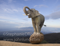 An elephant balances on a rock and survey's the terrain in this unusual elephant image.