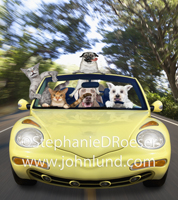 In this funny pet picture a group of cats and dogs enjoy a country drive in a yellow convertible.