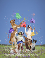 A group of happy dogs throw their graduation caps up in the air in celebration.