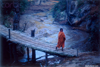 Picture of a young Burmese Monk as he crosses a bamboo footbridge wearing the traditional orange robes. Beautiful scenic picture.